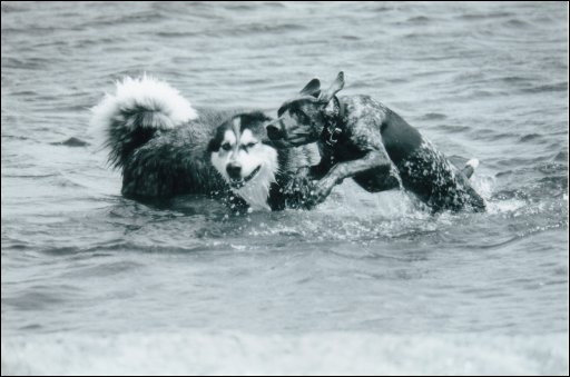 image from photo album of harper and mauja swimming